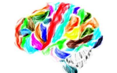 Cerveau : la fin des zones